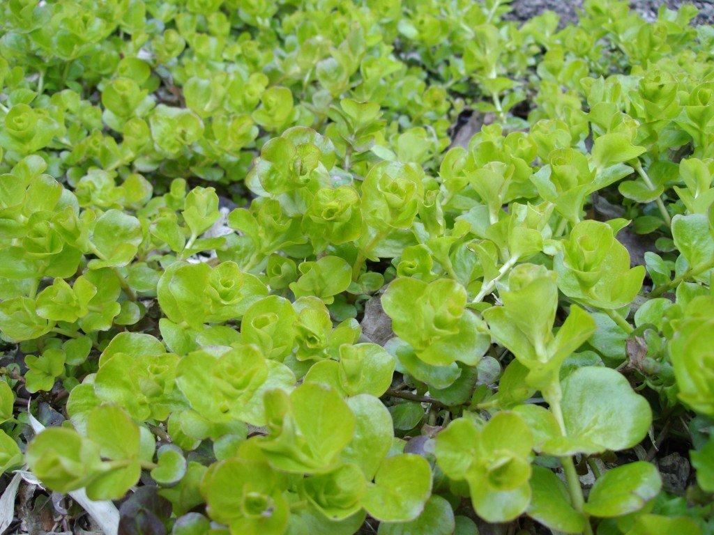 Plante vivace ombre le beau jardin des astuces pour bien - Plante couvre sol ombre ...