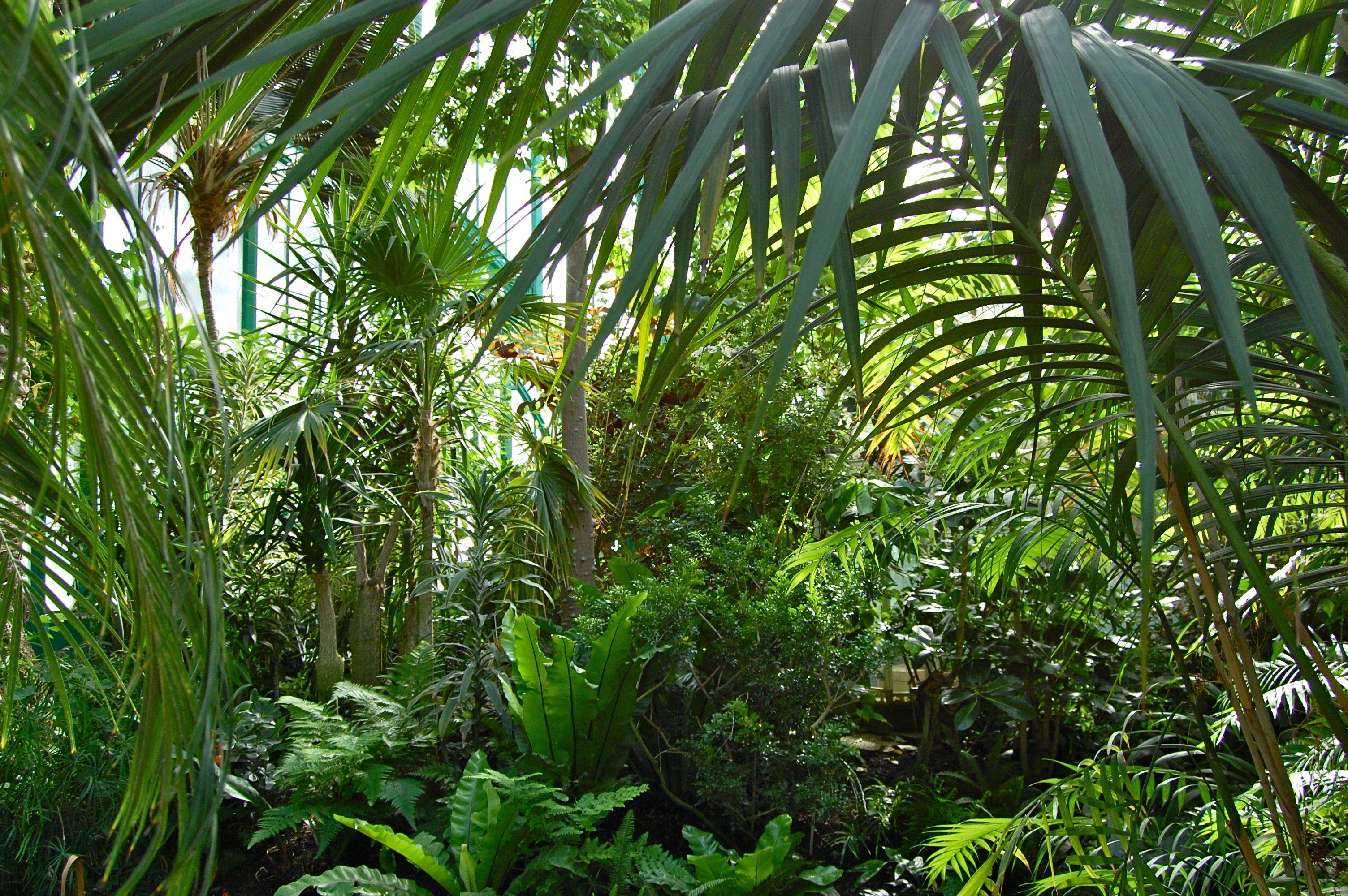 Point découverte / les grandes serres du jardin des plantes à ...