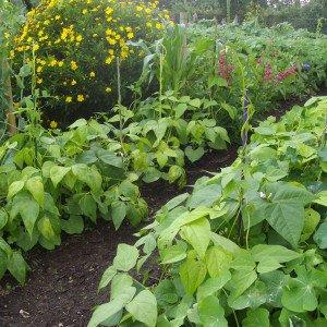 Foire aux Questions / FAQ –  Que Faire au Jardin au Mois de Juillet ?